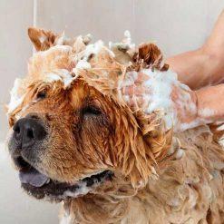 Šamponi za pse