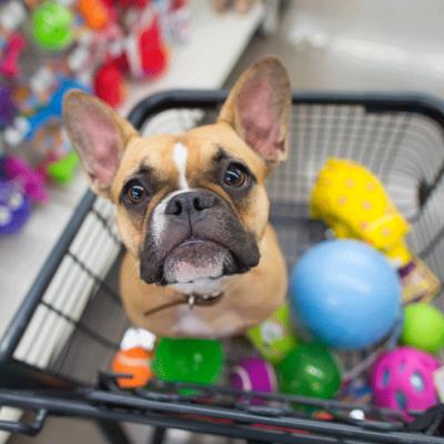 Kupovina psa