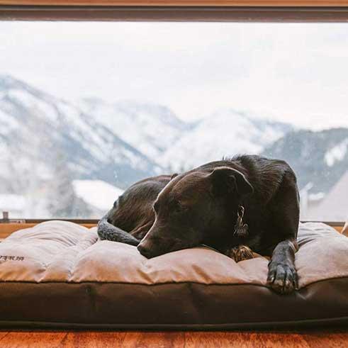 Kreveti za pse