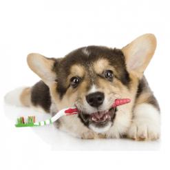 Oralna higijena pasa