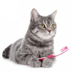 Higijena za mačke