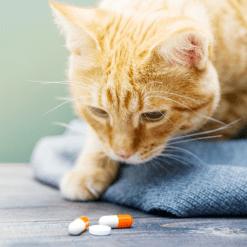 Suplementi za mačke