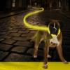 Svetleća ogrlica za pse Seecurity