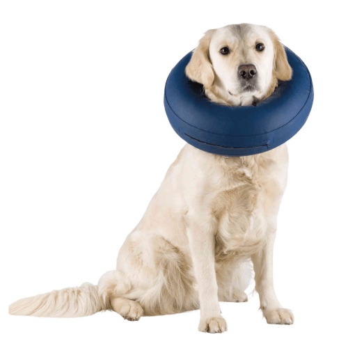 Kragna za pse na naduvavanje